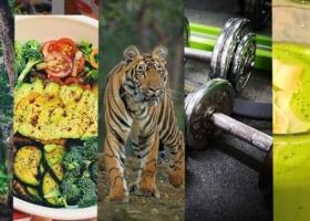 Motivado para el nuevo Año – Los mejores Ejercicios de Fitness para su Casa
