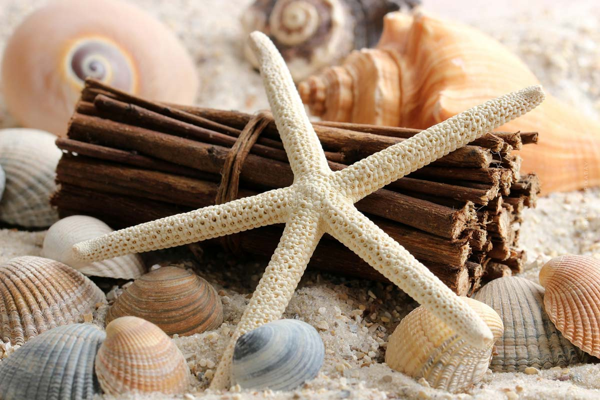 Mobiliario marítimo: Diseño, mobiliario y consejos de decoración para el hogar, el dormitorio y otros.